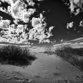 Sand and Clouds by Tad May - Landscapes Deserts ( clouds, mojave desert, sand, desert, kelso dunes, sand dunes, black and white, mojave national preserve, cloudscape, black and white photography, kelso )
