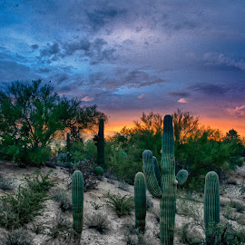 Sunrise over Tucson by Charlie Alolkoy - Landscapes Deserts ( desert, arizona, tucson, sunrise, cactus )