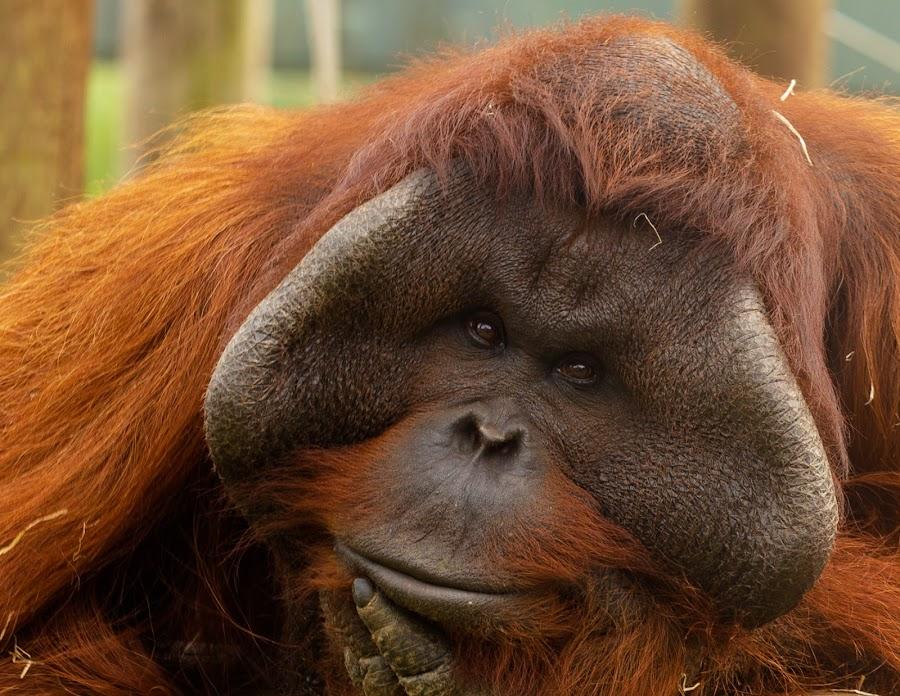 by Helen Andrews - Animals Other Mammals