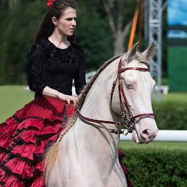 Cremello Horse by Aleksander Cierpisz - Animals Horses ( girldark, red, spanish, girl, rare, dress, hoeseback, horse, outdoor, cremello, show, equestrian )