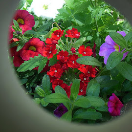 flowers by Paul Wante - Digital Art Things ( different, colors, art, flowers, digital )