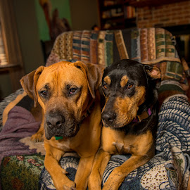 Son and Daughter by Benjamin Sr. - Animals - Dogs Portraits ( siblings dogs portraits pets fur babies friends buddies )