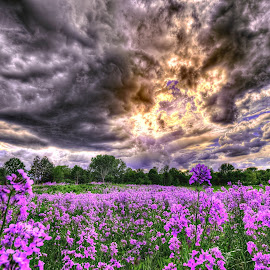 Purple Fields by Derrill Grabenstein - Landscapes Prairies, Meadows & Fields
