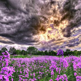 Purple Fields by DE Grabenstein - Landscapes Prairies, Meadows & Fields ( flower field, flowers, nebraska )