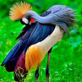 by Francois Wolfaardt - Animals Birds (  )