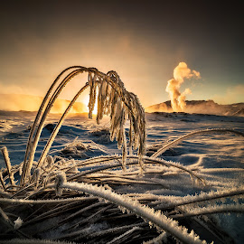 Hot and cold. by Hallgrimur P. Helgason - Landscapes Sunsets & Sunrises ( iceland, winter, cold, drooping, sunset, snow, hot spring vapour, straws, rime, hoarfrost )