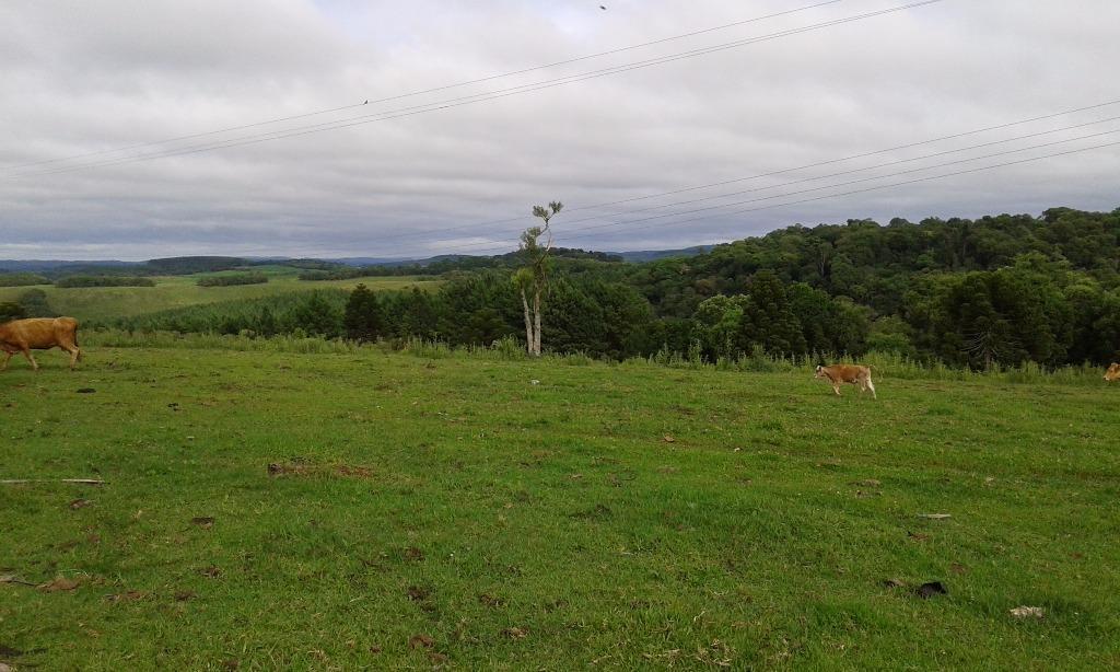 Fazenda rural à venda, Centro, Lages - FA0001.