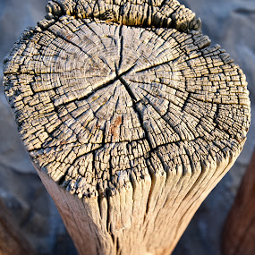 Beach Stump  by Benjamin Arthur - Artistic Objects Other Objects ( stump, wood, benjamin, holland, photographer, benjaminarthur.com, beach, ameland, photography, netherlands, arthur )