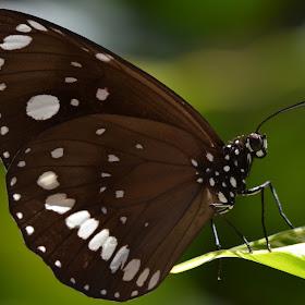 ButterflyBest1.jpg