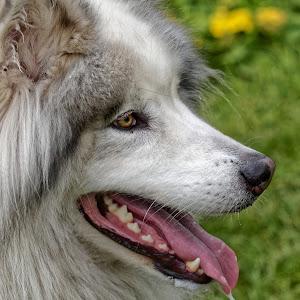 Dog 819_DxO Q.jpg