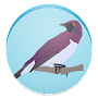 Bird Watching Blogs Free