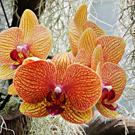 Orchids by Bernadette Mueller - Novices Only Flowers & Plants