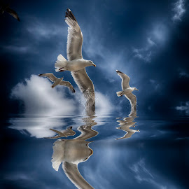 Seagulls splash by Egon Zitter - Digital Art Animals ( bird, gull, seagull, splash, reflection. )