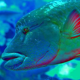 Fish by Tomasz Budziak - Animals Fish ( animals, fish )