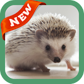App Hedgehog Wallpaper apk for kindle fire
