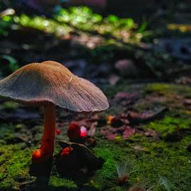 Mashroom by Rajesh Mondal - Nature Up Close Mushrooms & Fungi ( green, abstract, mashroom )