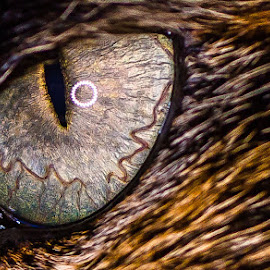 Cat eye close-up by Andy Vic Brown - Animals - Cats Portraits ( macro, detail, cat, close up, closeup, eye )