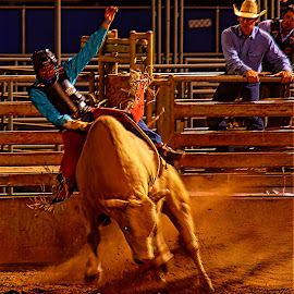 Riding an Angry Bull by Rob Bradshaw - Sports & Fitness Rodeo/Bull Riding ( bull rider, rodeo/bull riding, colorado, rodeo, rifle, riding an angry bull, sports & fitness )