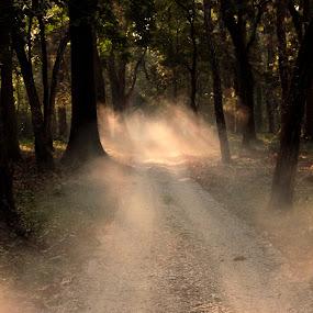 Light Path by Anindya Sengupta - Landscapes Forests
