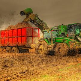 HARVESTING SUGARCANE by Ron Olivier - Digital Art Things ( harvesting sugarcane,  )