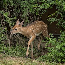 by Kelley Hurwitz Ahr - Animals Other Mammals ( asas pictures, trey )