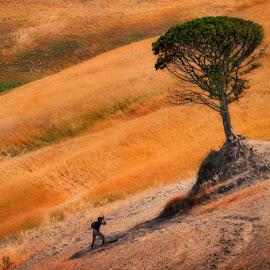 A lonely tree by Cvetka Zavernik - Landscapes Travel ( toscana, tree, photographer, man )