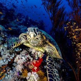 sharm_uw5 by Emanuele Pola - Animals Sea Creatures ( nauticam, underwater, sharm el sheikh, diving, olympus )