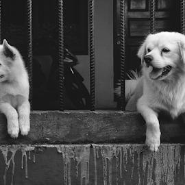 Houtaro & Milo by Kelvin Austin - Animals - Dogs Portraits
