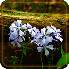 Flowers Forest live wallpaper