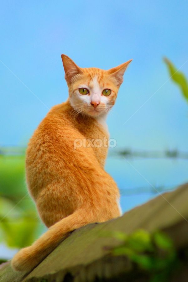 Portrait of Lonely Cat by Rony Nofrianto - Animals - Cats Portraits ( cat, cat and gate, cat portrait, lonely cat, cat and sky )