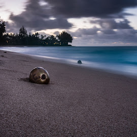 The Lonely Coconut by Kelley Hurwitz Ahr - Landscapes Beaches ( hawaii day one )