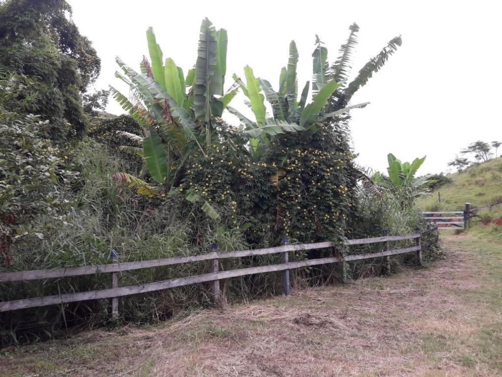 Fazenda / Sítio à venda em Werneck, Paraíba do Sul - RJ - Foto 7