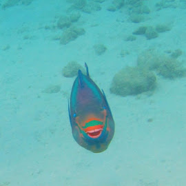 by Denise Dunkley Hall - Animals Fish