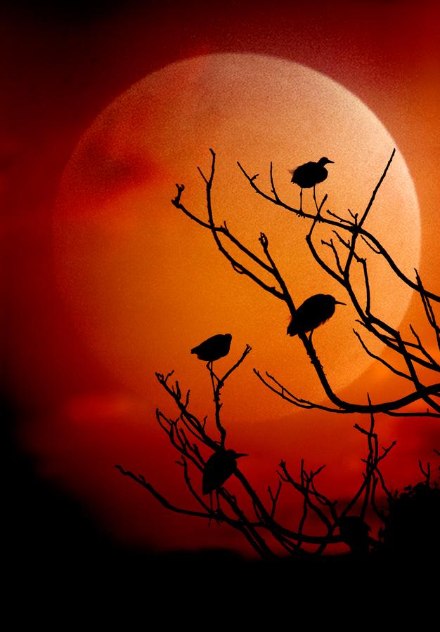 by Jomandi Loka - Animals Birds