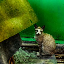 Tertangkap by Ami Yunita - Animals - Cats Portraits