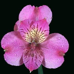 Small Pink Flower by Steve Edwards - Nature Up Close Flowers - 2011-2013 ( flower,  )