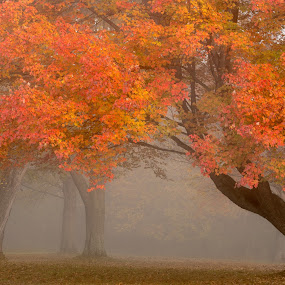 trees in fog by Sam Alexander - Nature Up Close Trees & Bushes