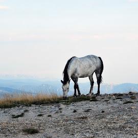 by Gigi Furtuna - Animals Horses