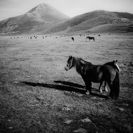 Italian Far west by Francesco Iafelice - Animals Horses ( horses, horse, italy )