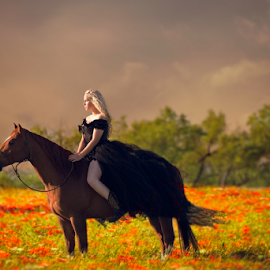 Sunset Bliss by Shawnessy Ransom - Animals Horses ( countryside, seniors, equine, field flower, sunset, texas, horse, cowgirl, western, sunshine, storm clouds )