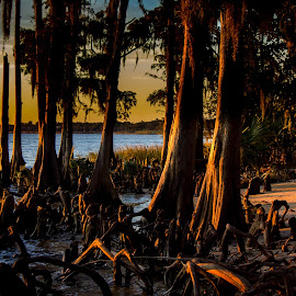 A Cypress Sunset by Kevin Kern - Landscapes Sunsets & Sunrises ( lake ponchartrain, new orleans, mandeville, sunset, fontainbleau )