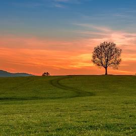 December sunset by Jeni Madjarova-Petrova - Landscapes Prairies, Meadows & Fields ( field, tree, grass, sunset, path )