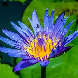 by Johnny Vu - Flowers Single Flower