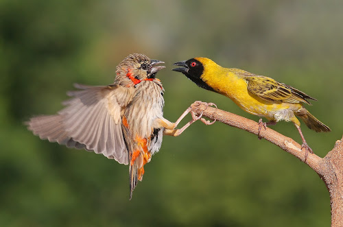 2 birds by Francois Loubser - Animals Birds