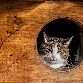 Cat by Stefan Mihailovic - Animals - Cats Portraits ( streetphotography, cat, park, belgrade, street, street scene, sleeping, yellow, sleep, street photography, cats, street life, serbia, streets, street scenes, hause naimal, street lights, animal,  )