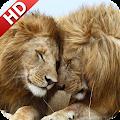 App Lion Wallpaper version 2015 APK