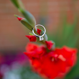Ring and Flower by Justin Duff - Wedding Other ( hanging, wedding ring, red flower, colorful, blur, engagement ring, gladiolus, flower )