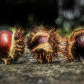 CHESTNUTS by Plamen Mirchev - Uncategorized All Uncategorized ( close up, nature, yellow, impression, autumn, chestnut, colors, colorful,  )