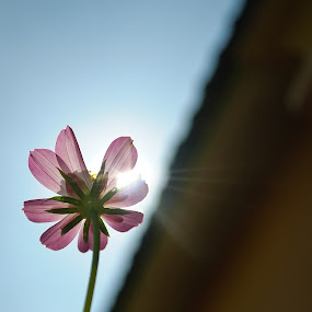 We All  Live Under The Same Sun by Mohd Afiq - Nature Up Close Flowers - 2011-2013