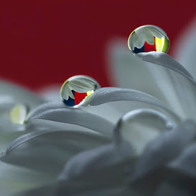 One Step at a Time by Gusti Yogiswara - Abstract Fine Art ( dew, drop, white, flower )